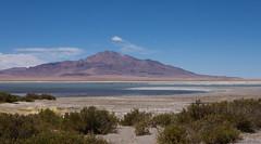 Nevados de Poquis and Laguna de Tara (Ralph Green) Tags: chile southamerica flamingo lagoon saltlake reservanacionallosflamencos lagunadetara nevadosdepoquis
