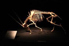 Science World - October 15, 2015 (rieserrano) Tags: skeleton oryx bodyworlds plastination