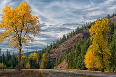 Fall Foliage (Philip Kuntz) Tags: autumn fallfoliage murray northidaho thompsonpass scenichighways autumnroads coeurdalenemountain