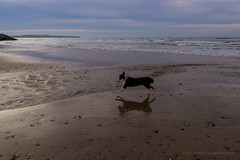 (gaylor Lebellanger) Tags: sunset dog chien france beach beauty canon action paysage plage calais nord 600d amazingshoot