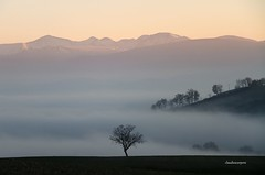 (claudiophoto) Tags: winter snow mountains nature fog montagne landscapes lemarche sibillini montisibillini naturelife paesaggiinvernali landscapephoto sibillininationalpark mistylandscape paesaggidellemarche lemarcheregion
