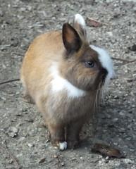 coniglietto (PhoToRCh) Tags: pet pets macro rabbit animals colori animali cucciolo coniglio viaggiare