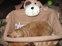 scooby-in-toy-box_4558966965_o