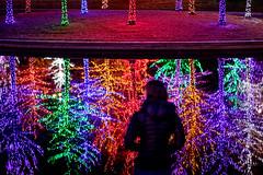 Laura and lights reflected (pixl8) Tags: laura christmaslights vitruvianlights