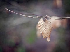 2016-01-01_16-00-10 (torstenbehrens) Tags: lumix bokeh natur panasonic altglas mft dmcg1