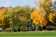(joeldinda) Tags: fall colors tree autumn portland sky cloud 3328 november 2016 park lawn house hydrant d500 nikon nikond500 ioniacounty michigan 20161101kittiesleavesportlandgeesed500raw1083328