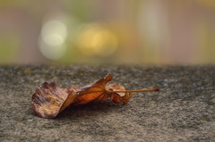 El final del verano / The end of summer (hequebaeza) Tags: equinoccio equinox otoo autumn hoja leaf nikon d5100 nikond5100 3570mm hequebaeza