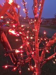 Christmas Display - 2015 (Dave Vandyne) Tags: christmas lights holiday holidays decorating decorations 2015 display tree close up red