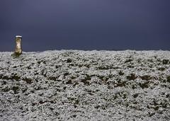 PRouD. (Warmoezenier) Tags: alleen alone dark dijk dike donker fier nederland number nummer paal proud sneeuw snow trots walcheren white wit zeeland