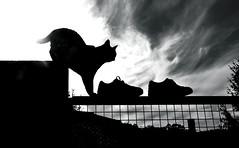 Composicin con gato e zapatos (carlosdeteis.foto) Tags: carlosdeteis galiza galicia cats gatos jatos