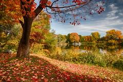 Lumire d'automne (Paul Leb) Tags: paysage automne canada montral qubec autumn fall otoo arbre tree paisaje landscape rbol couleur color lesaintehlne island isla lac lago lake