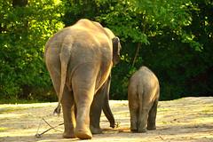 Hamburg,Tierpark Hagenbeck (Germany) (jens_helmecke) Tags: hamburg stadt hansestadt city elefant tier animal tierpark zoo hagenbeck nikon jens helmecke deutschland germany