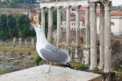 Crying for lost glory (Michal Hajek) Tags: d5500 18140mm rome ruin nikkor czphoto forum