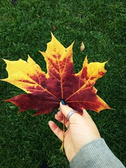 Autum #leaves #autumn #hand #cold #winter #nails #ring #fall #orange #red #yellow #halloween #grass #green #coats (laurenbridge12) Tags: leaves autumn hand cold winter nails ring fall orange red yellow halloween grass green coats