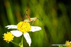 09-20-2015_18.08.04--D700-433-device-2000-wm (iSuffusion) Tags: d700 tampa tokina100mm28macro florida insects macro nikon gibsonton unitedstates us