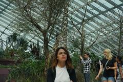 DSC03635 (oliveplum) Tags: tribaltempofloraldisplay sony olympusomsystemzuikomcautot12f85mm singapore bokeh people flowerdome flickrtravelaward marinabay