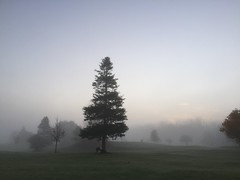 Foggy October Morning (firehouse.ie) Tags: misty mist landscape nature county coclare ennis clare midwest ireland cold fall autumn 2016 october weather morning morn dawn foggy fog trees tree