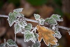 IMG_1856 (nehad1) Tags: nature winter saveearth