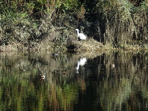 Dart birdlife