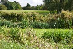 Water Madows (Lil Shepherd) Tags: landscape riverlea walthamabbey