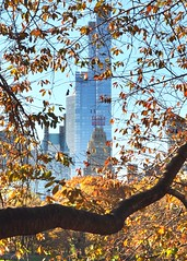 Out on a limb (ZoKë) Tags: centralpark centralparkwest midtown newyorkcity architecture one57 essexhouse