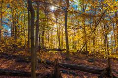 Hilton Area (11-10-16)-019 (nickatkins) Tags: fall fallcolors fallcolor fallfoliage autumn water sun sunlight stream