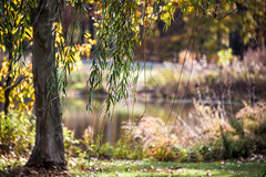 Beautiful day at the Park (Dotsy McCurly) Tags: beautiful day park nature trees water lake pond reflections autumn grasses bokeh dof nikon d750 nj