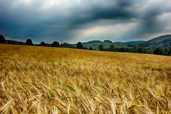 Broken Frame (manoftaste.de) Tags: ernte feld sturm harvest field storm nrw germany sauerland