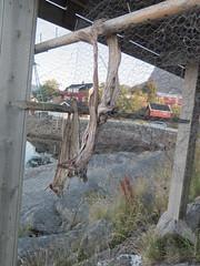 Svolvr - Svinya (Arne Sund) Tags: lofoten svolvr svinya