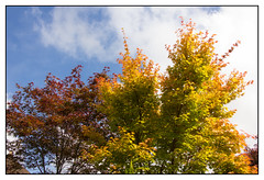 Song of Autumn (Audrey A Jackson) Tags: blue trees red sky colour green nature clouds walsall canon60d fourseasonsgarden 1001nightsmagiccity