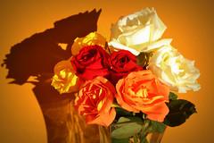 A todas las madres (Eduardo Amorim) Tags: brazil flower southamerica fleur rose brasil flor rosa blumen pelotas fiore riograndedosul pampa campanha brsil amricadosul fronteira amriquedusud sudamrica suramrica amricadelsur sdamerika costadoce americadelsud americameridionale eduardoamorim