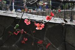 Red flowers. (giadamulas) Tags: flowers nature beautiful natura fiori