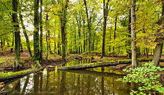 Autumn, waiting for the nice colors to come ... (Alex Verweij) Tags: autumn holland reflection green water canon groen beek herfst netherland reflectie 17mm hierden alexverweij