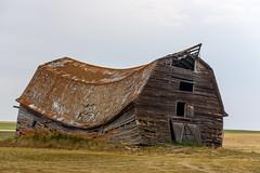 Who Sat on my Barn? (TigerPal) Tags: abandoned barn nikon ruin forgotten alberta d750 prairie bent plains backroads derelict sway ruraldecay gravelroad dustyroad acadiavalley pallisertriangle