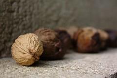 Walnuts (dididumm) Tags: autumn time herbst walnuts harvest autumnal ernte walnsse herbstlich erntezeit