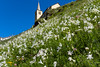 Riale in fiore (ez.81) Tags: fioritura