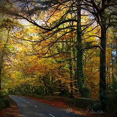 autumn drive .... (ggcphoto) Tags: autumn leaves drive squared ireland glen season lumia