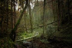 creek #2 (Schub@) Tags: bridge art nature creek forest sony natur sigma canyon bach e brcke wald f28 schlucht naturpark 19mm bannwald welzheim lauffenmhle a6000 wieslauf schwbischerwald emount wieslaufschlucht ilce6000