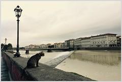 di vedetta sul fiume (vigopix) Tags: gatto lampione fiume ponte arno firenze cat streetlamp river bridge florence katze lampion flus brcke florenz vedetta lookout wache