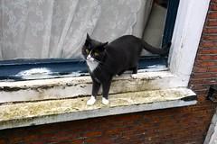 Cat (Michiel2005) Tags: holland netherlands animal cat leiden kat nederland dier poes raam