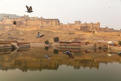 Amer Fort, Jaipur (DisButifulLife) Tags: travel india colorful palace jaipur forts rajasthan udaipur jodhpur