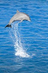 Tursiops truncatus - Bottlenose Dolphin (Going to the Zoo with Trebaruna) Tags: valencia animal zoo aquarium spain zooanimal loceanografic 2013 loceanograficvalencia aquariumvalencia 19092013