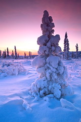 Shades Of Winter (Wolfhorn) Tags: winter snow cold nature alaska december wilderness
