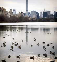 Reservoir Residents (Joe Josephs: 2,861,655 views - thank you) Tags: nyc newyorkcity water birds skyline architecture centralpark manhattan ducks centralparknewyork waterreflections urbanparks jacquelinekennedyonassisreservoir joejosephs joejosephsphotography