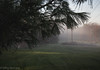 IMG_1933 (hillarycharris) Tags: morning trees mist nature fog sunrise canon landscape outdoors foggy tamron morningmist naturephotography morningfog mistymorning treesinfog foggytrees foggylandscape sunrisephotography treesinmist mistylandscape canonrebelt5 canoneost5