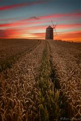 St. Monans Windmill (buddsnax) Tags: stmonans windmill kingdomoffife fife painterlyskies gloaming scotland uk farm wheat ploughlines eastnuekoffife
