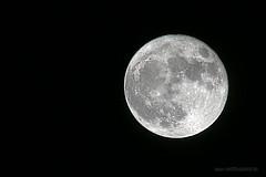 Full moon 11-14-2016 (katebartnik) Tags: full moon canon 100400mm 1dx kenko teleplus x2 teleconverter sky explore