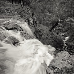 Sailors Falls, VIC. Taken a day after flash floods, from the top of the falls looking into the gully.  Hasselblad 500c   Fuji Acros (amilic) Tags: film blackandwhite bw hasselblad distagon bush australia waterfall gumtrees gully longexposure landscape wilderness outdoor water
