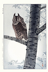Cherry and scops owl (Japanese Flower and Bird Art) Tags: flower cherry prunus rosaceae bird scops owl otus strigidae shiro kasamatsu modern woodblock print japan japanese art readercollection