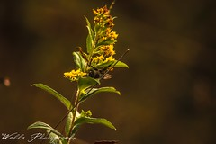 (Joshua Wells Photography) Tags: swamp storm clouds canon 650d t4i photography fallphotos fallcolors awesome bird bees wasp flying road leaves butterfly monarch